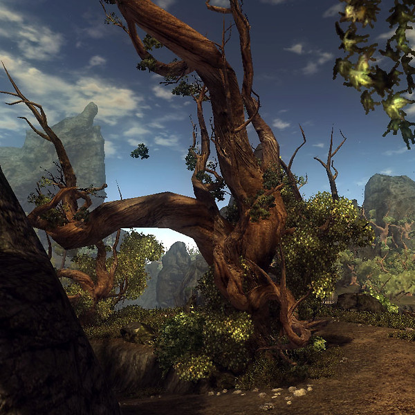 An old tree in Risen