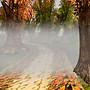 Cold Autumn Morn