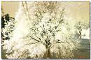 Albero 2 - Tree 2