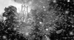 Winter Morning ~