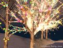 Winterfell Skating Pond Trees by Princess Ivory