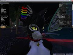 Script loads and my avatars
