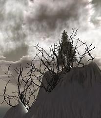 Misali Tree