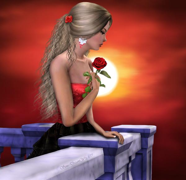 Solitary Rose