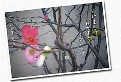 年賀状2010_2_v3