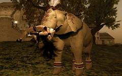 Circus Vivi