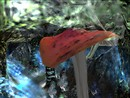 Giant Mushrooms in the Bentham Forest - Chimera Lemon