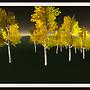 Northern Birches 5