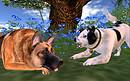 VKC Widget wants to play with German Shepherd