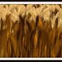 Wheat Field 2