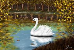 A Swan as white as Snow