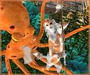 Orange Koi at Cave Cult, Cave Rua_003