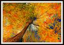 Golden Leaves At Elorian Garden