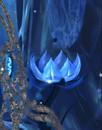 BlueBlossom