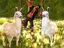 Drama Llamas - Raul Crimson