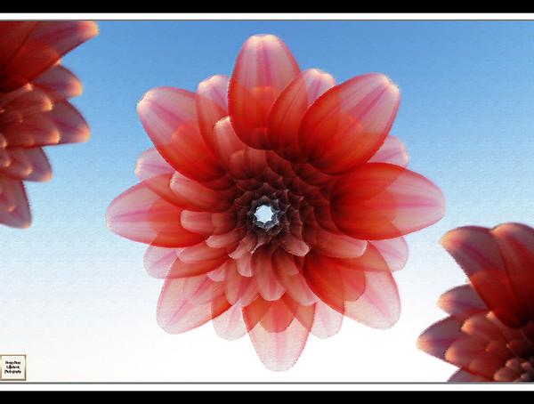 eshis lotus flowers 2