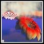 eshi-lotus_2