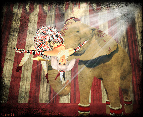 The Elephant and the Clown