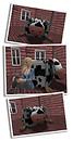 cow pics