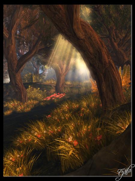 Garden of Dreams Of Sun and Shadows