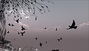 Axis Mundi (Birds) - Igor Ballyhoo
