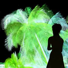 sannomiya palm