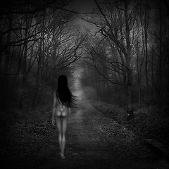 The Spirit in the dark Forest