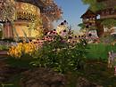 Serenity falls Echinacea