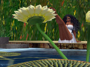 Serenity falls water lilies