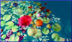 jellyfish through the water lilies