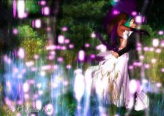 Dancing in Absentia 2