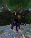Wishful Wings: The lily pool