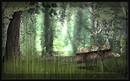 Silent ~frog's garden_019~