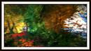 Foliage - Bentham Forest