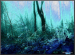 in a blue forest