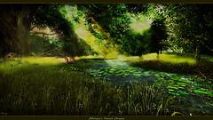 Alirium's Forest Stream