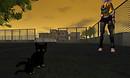 Small stray cats at Kenjin