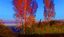 The silouette of burnt umber trees caress a blue horizon