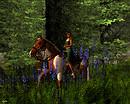 horseback mountain forest trail