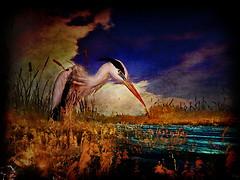 Morning Meadow Hunt