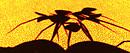 Shadows of Burn2:spider(s)