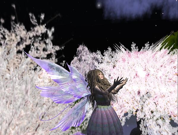 Dream of Cherry blossom