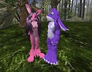 Lacy and Bunny, Again