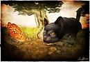 Il gioco del gatto