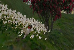 Hummingbird - Oil Painting