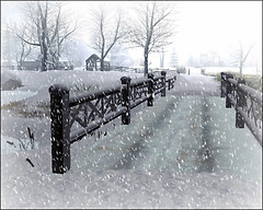 SL Winter