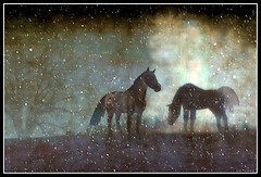 Horses in a Magical Winter Night