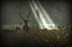Mystico Deer