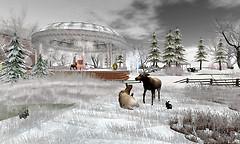 Winter In Voidicus