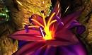 flower macro - Torley Linden